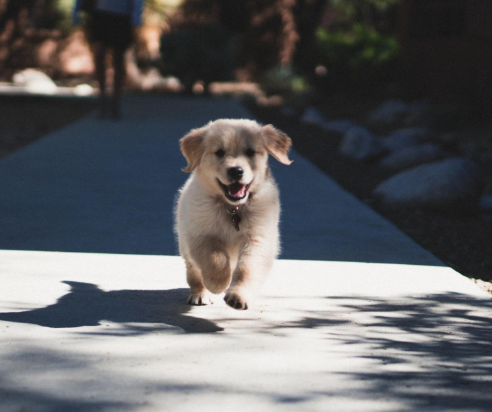 How to Stop Puppy from Jumping and Biting