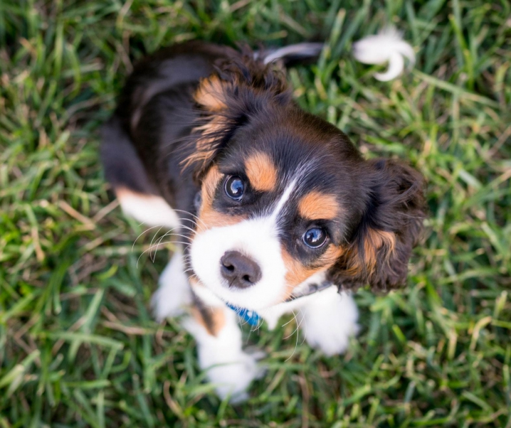 How to Stop a Puppy From Barking When Left Alone
